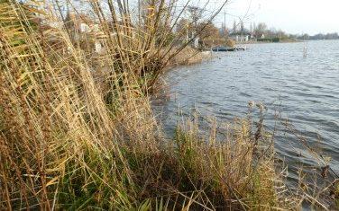Winters zaagwerk in oevers plassengebied nodig